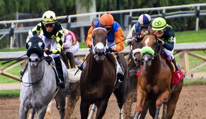 formation categorisation-des courses et des chevaux